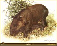 Андский тапир