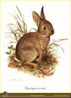 Кролик, выращенный в садке
