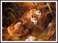 Тени в траве - молодые кугуары