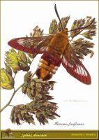Сумеречная бабочка