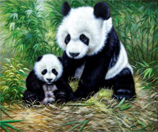 панды.Мама и малыш.худ.Т.Бруно
