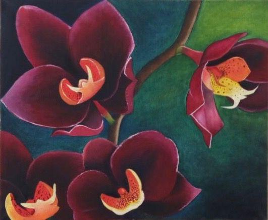 Бордовые орхидеи