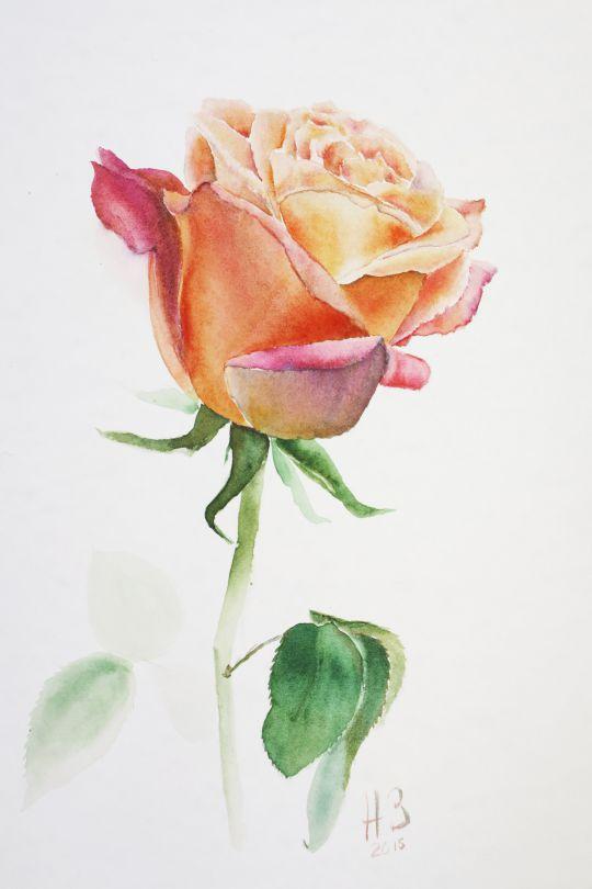 Роза Свадхистхана