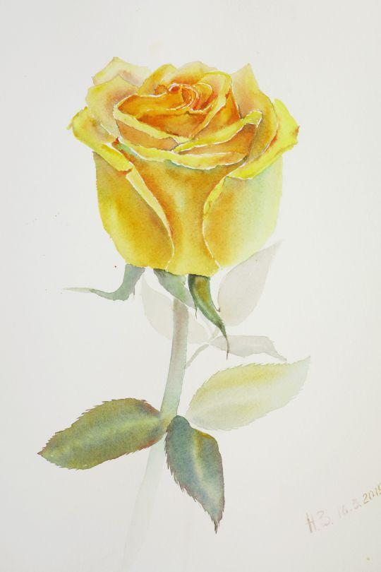 Картина акварелью желтая Роза