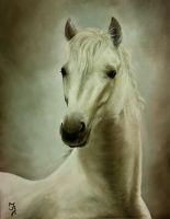 Лошадь №11
