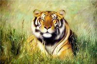 Тигр.худ.Т. Бруно