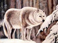 Волк.худ.Т.Бруно