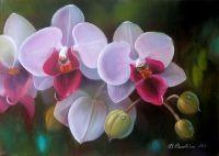 Орхидея с росинками