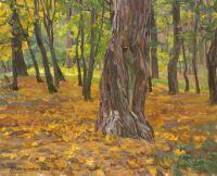 Осень старого дерева