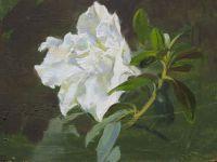 Цветок азалии