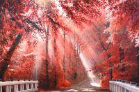 «Багряных листьев томный, лёгкий шелест…». Худ. А.Ромм