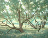 """Парк """"УЗКОЕ"""", дерева"""