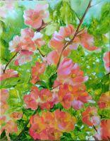 Айва японская в цвету