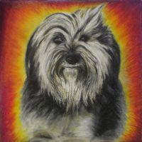Портреты собак. Моя собака.
