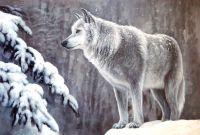 В зимнем лесу.худ.А.Бруно