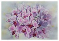 Картина Орхидея на свету