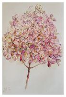 картина цветы Зимняя гортензия