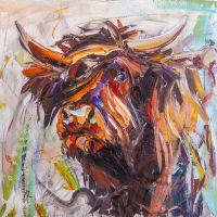 Шотландский бык
